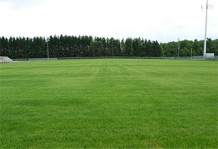 Résultat ensemencement terrain soccer, football, irrigation, fertilisation