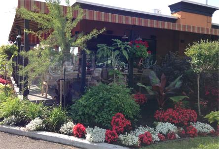 Entretien de plate-bande, aménagement paysager, fleur annuelle, taille végétaux