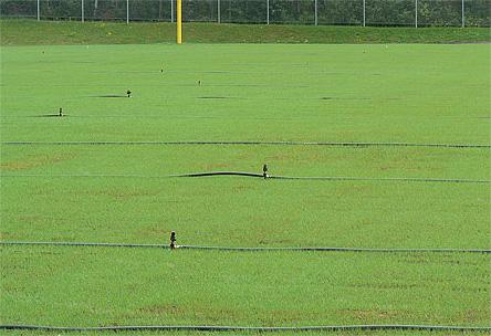 Résultat ensemencement terrain football, soccer, humus, irrigation