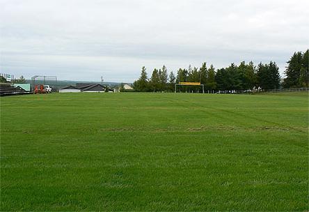 Résultat ensemencement terrain football, soccer, irrigation, fertilisation